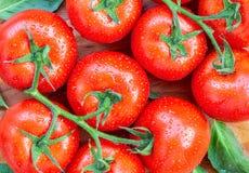 De tomaten met water laat vallen 1 Royalty-vrije Stock Fotografie