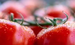 De tomaten met water laat vallen 8 Royalty-vrije Stock Foto
