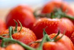 De tomaten met water laat vallen 10 Royalty-vrije Stock Afbeelding