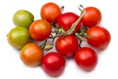 De tomaten van de borstelkers royalty-vrije stock foto's