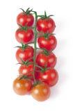 De tomaten van de kers op een groene tak Royalty-vrije Stock Foto's