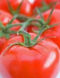 De tomaten van de wijnstok. Stock Afbeeldingen