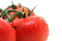 De Tomaten van de wijnstok Stock Afbeelding