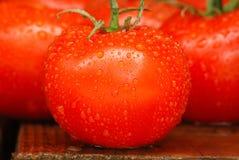 De Tomaten van de zomer stock afbeeldingen