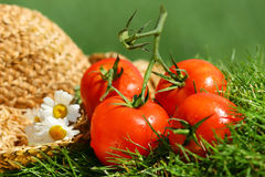 De tomaten van de zomer Royalty-vrije Stock Fotografie