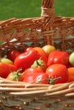 De tomaten van Rome in een mand royalty-vrije stock foto's