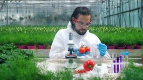 De tomaten worden met chemische producten door een mannelijke bioloog worden getest die stock video