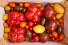 De tomatencultivars van het erfgoed Royalty-vrije Stock Foto's