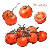 De tomatenschetsen van waterverfkleurpotloden met inktoverzicht dat worden geplaatst Stock Fotografie