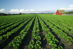 De toneel Landbouw Stock Afbeelding