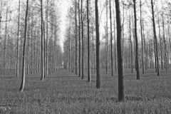 De toneel landbouwbedrijven van de boomaanplanting in Noord-India Royalty-vrije Stock Afbeeldingen