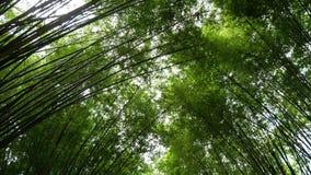De toneel verse bostunnel van het aard groene bamboe stock videobeelden