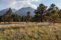 De Toneelschoonheid van Colorado Rocky Mountains - Wildflowers Royalty-vrije Stock Fotografie
