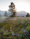 De Toneelschoonheid van Colorado Rocky Mountains - Wildflowers Royalty-vrije Stock Foto's