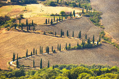 De toneelweg van de cipresboom in Pienza dichtbij Siena, Toscanië, Italië. Royalty-vrije Stock Afbeeldingen
