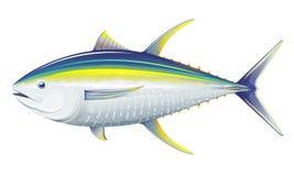 De tonijn van de zalmforel Royalty-vrije Stock Afbeelding