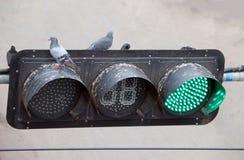 De toppositie van duifvogels op het verkeerslicht, op groen licht stock afbeeldingen