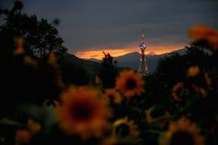 De toren op zonsondergang Stock Afbeeldingen