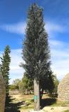 De toren van de celtelefoon als boom wordt vermomd die stock fotografie