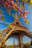 De Toren van Eiffel met de lenteboom in Parijs, Frankrijk stock foto's