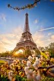 De Toren van Eiffel met de lenteboom in Parijs, Frankrijk stock fotografie
