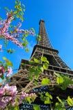 De Toren van Eiffel met kersen in Parijs Frankrijk stock foto's