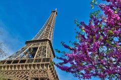 De Toren van Eiffel met kersen in Parijs Frankrijk stock fotografie