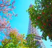 De Toren van Eiffel met de lenteboom in Parijs, Frankrijk Stock Afbeelding