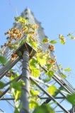 De toren van het metaal die door de installatie wordt verpakt Royalty-vrije Stock Afbeelding