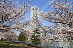 De Toren van het Yokohamaoriëntatiepunt en de kersenbloesems Royalty-vrije Stock Foto's