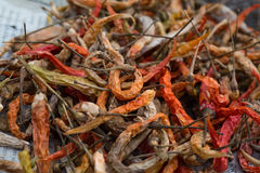 De torkade röda chillepepparen Royaltyfria Foton