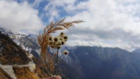 de torra blommorna Arkivfoto