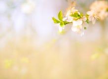 de tot bloei komende achtergrond van de boomtak Royalty-vrije Stock Afbeelding