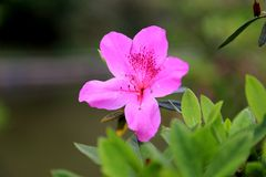 De tot bloei komende bloem Stock Foto's