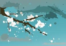 De tot bloei komende kers van de tak Stock Afbeelding