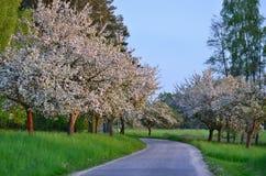 De tot bloei komende manier van de lente Stock Foto