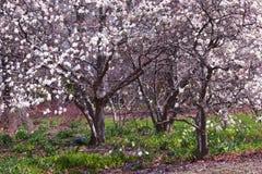 De tot bloei komende Tuin van de Lente Stock Fotografie