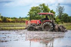 De tractor bereidt het gebied voor het kweken van rijst voor Stock Fotografie