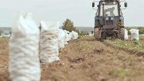 De tractor ploegt en legt carft bloot De witte volledige zakken van aardappels bevinden zich op het gebied Binnen oogstend aardap royalty-vrije stock foto