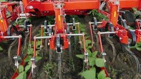 De tractor verwijdert onkruid uit rijen van zonnebloemen De milieuvriendelijke landbouw zonder chemische producten stock video