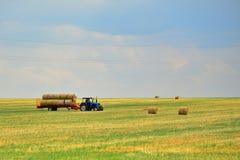 De tractor verzamelt het hooi in schoven en verwijdert het uit het gebied na het maaien van de korrel De agro-industriële industr royalty-vrije stock afbeeldingen