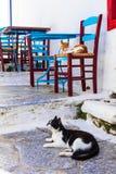 De traditionele reeks van Griekenland - de katten en straattavernas, Amorgos zijn Stock Fotografie