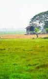 De traditionele Thaise groei van de stijlrijst stock afbeeldingen