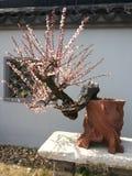 De traditionele tuin van China Suzhou Royalty-vrije Stock Afbeelding