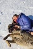 De trainer en de grijze wolf liggen samen op de sneeuw in het gebied stock foto's