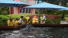 De trainer geeft vissen aan dolfijnen in Seaworld, stock videobeelden