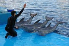 De trainer van de dolfijn Stock Foto
