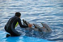 De trainer van de dolfijn Stock Fotografie