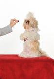 De Trainer van de hond stock afbeelding