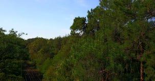 De tramritten in het midden van het groene bos stock video